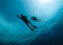Max Shark Diving